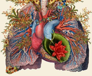 art, heart, and lungs image