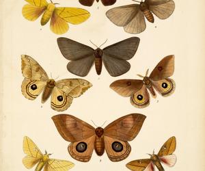biology, insecto, and mariposa image