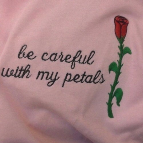 rose, quotes, and pink image