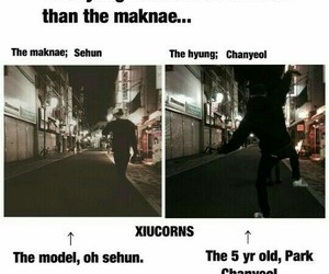 exo, funny, and quote image