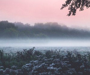 blue, fog, and pink image