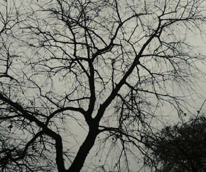awesome, blackandwhite, and branches image