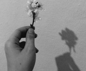 alone, black, and flower image