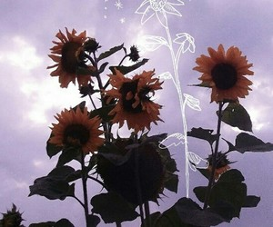 flowers, indie, and sunflowers image