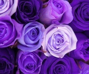 purple, rose, and flowers image