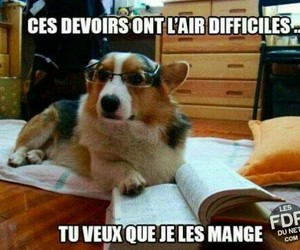 dog, funny, and joke image