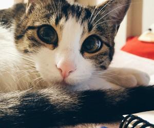 animals, cat, and happy image