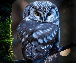 bird, branch, and owl image