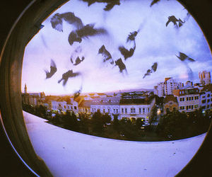 bird, city, and photography image