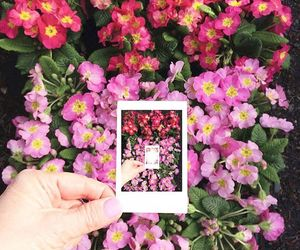 flowers, pink, and polaroid image