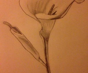draw, flowers, and novice image
