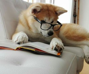 dog, friend, and read image