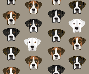 animal, boxer, and pattern image