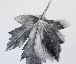 leaf, realistic drawing, and cute image