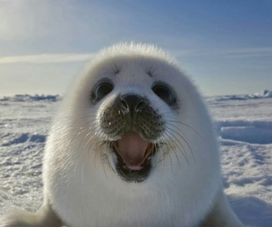 baby, smile, and animal image
