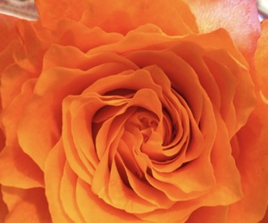 orange and flowers image