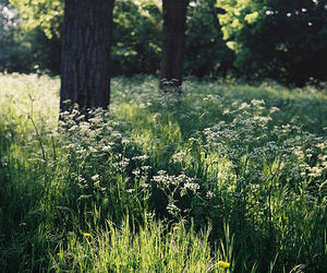 flowers, nature, and trees image