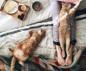 cat, bed, and breakfast image