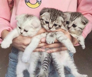 cat, animal, and pink image