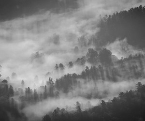 black and white and fog image