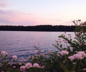 beautiful, flowers, and lake image