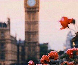 background, flowers, and city image