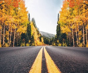 landscape, nature, and road image