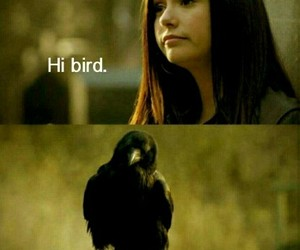 tvd, bird, and elena image