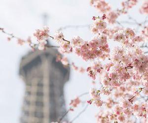 blossom, bokeh, and cherry blossom image
