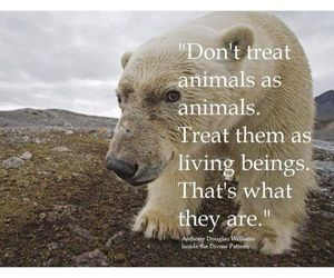 animals, quotes, and truth image