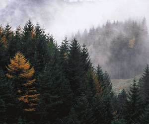 tree, fall, and landscape image