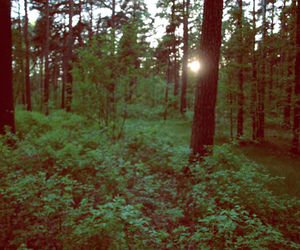 effect, forest, and nature image
