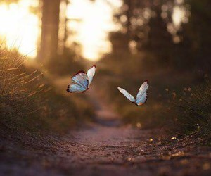 butterflies, forest, and nature image