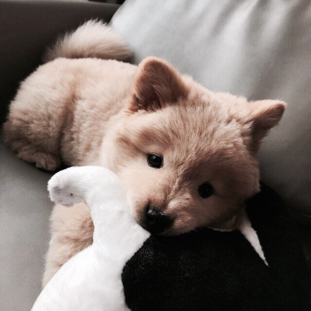 dog, cute, and friend image