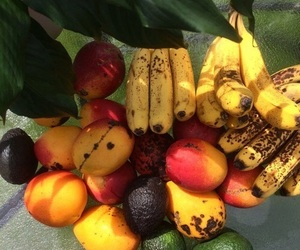 fruit, tropical, and banana image