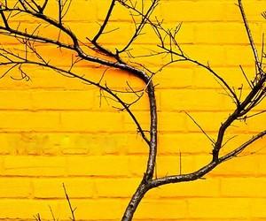 yellow wall, siyahalbatros.tumblr.com, and yellow image