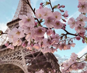 beautiful, blossom, and paris image