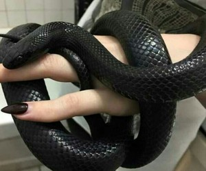 black, pretty, and snakes image