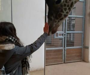 animals, girl, and zoo image
