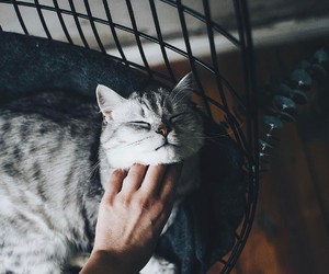 adorable, animal, and lovely image