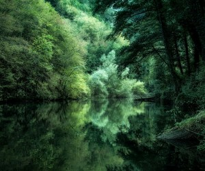 green, nature, and photography image