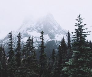 mountains, forest, and nature image