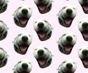 perro, contento, and wallpaper image