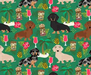 animal, background, and dachshund image