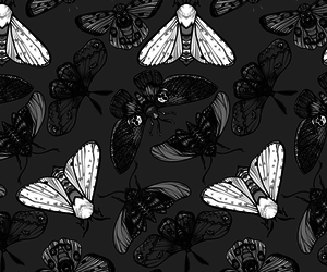background, grey, and insect image