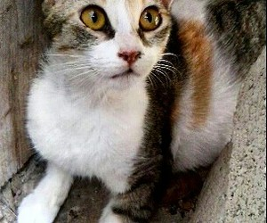 Animales, animals, and cat image