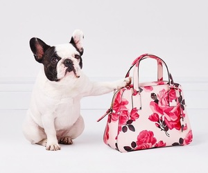 kate spade and cute image