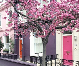 spring, beautiful, and pink image