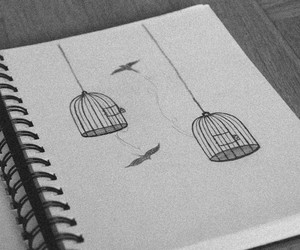 drawing, bird, and cage image