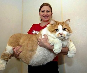 big, girl, and cat image
